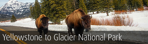 Yellowstone to Glacier National Parks